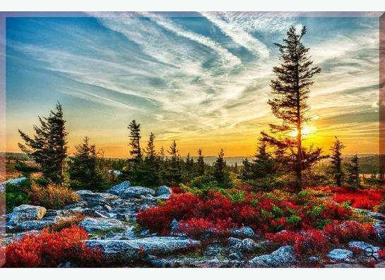 Фотокартина на холсте: Волшебный лес на закате