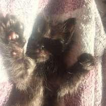 Котёнок мальчик, в г.Запорожье