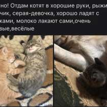 Отдам котят, в г.Зыряновск