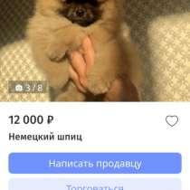 Куплю щенка микро шпица, в Березовский