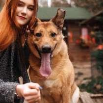 Очень хороший друг и веселый пёс, в Санкт-Петербурге