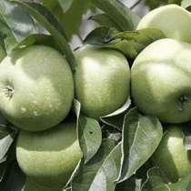 Овощи и фрукты из Краснодара, в Анапе