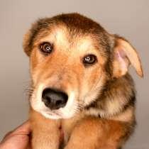 3 щенка метиса в добрые руки, в Москве