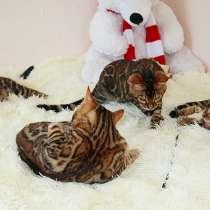 Бенгальские котята из питомника. Sale Bengal kittens! n 24, в г.Могилёв-Подольский
