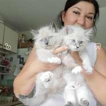 Котята Невские - Маскарадные, в г.Кульмбах