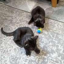 Боня и Алекс, очаровательные домашние котята в добрые руки, в Москве