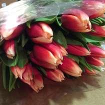 Тюльпаны, в Новосибирске