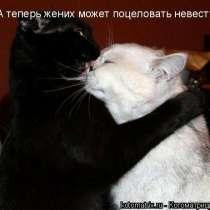 Отдам БЕСПЛАТНО, кота и кошку(очень умные, дрессированные), в Иркутске