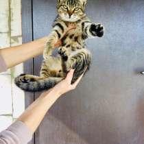 Котик бегемотик, в Аксае