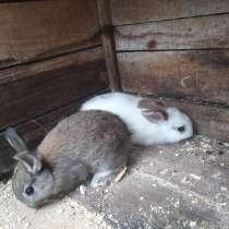 Кролики декоративные самка и самец симпатичная, в Кулебаках