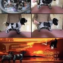 Породные щенки английского кокер-спаниеля, в Северодвинске