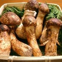 Породам гриб мацутакэ, в Тынде