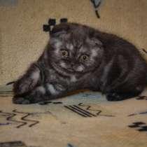 Котята, в Чите