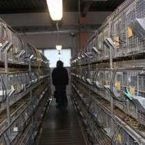 Разведение шиншилл -Высокодоходный бизнес на дому, в Набережных Челнах