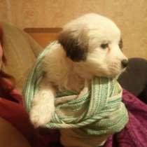 Отдам щенка в добрые руки, в Георгиевске