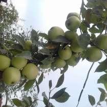 Продам саженцы яблонь большой выбор, рябину слад, боярку, в г.Усть-Каменогорск