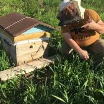 Продам Отличный мед Кемерово, в Кемерове