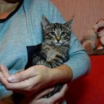 Котята Майкрофт, Шерлок и Ватсон ищут дом, в Санкт-Петербурге