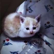 Отдам котенка в ооочень добрые руки!!!, в г.Бишкек