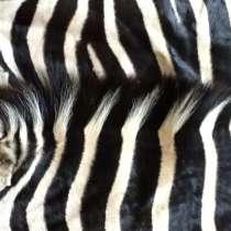 Шкура зебры из ЮАР — атрибут африканского сафари, в г.Йоханнесбург