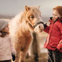 Детский отдых. Уроки зоотерапии. Калининград, в Калининграде