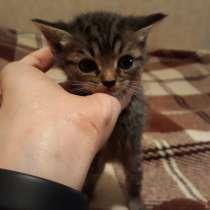Котята в добрые руки, в Челябинске