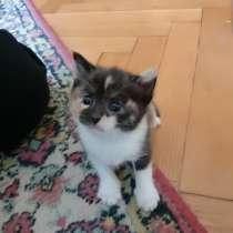 Котята, в г.Пинск