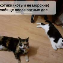 Кошка, в г.Орша