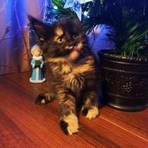 Продажа котят мейн кунов, в Снежинске
