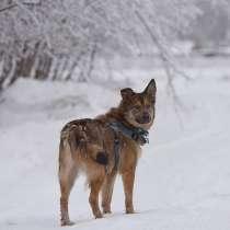 Молодая собачка Динга ищет семью, в Москве