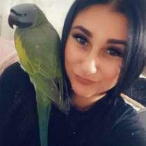 Большой китайский кольчаный попугай, в г.Минск