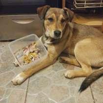 Алиса- Очень умная, игривая и любвеобильная собака ищет дом, в г.Таллин