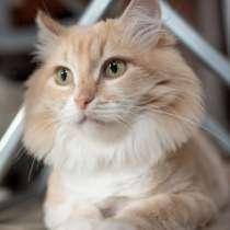 Кошечка Маргарита в поисках дома, в Москве