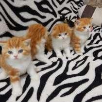 Умные котята, в Дмитрове
