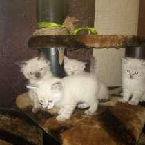Очень милые игривые котятки для вас, в Кумертау