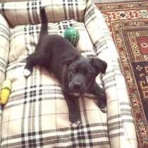 Симпатичный щенок от мелкой собачки ищет дом, в Санкт-Петербурге