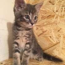Котёнок Жорик, в Тамбове