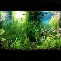 Дизайн аквариума, в Краснодаре
