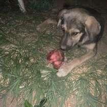 Отдам щенка в хорошие добрые любящие руки(девочка), в г.Самарканд