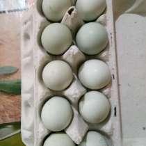 Яйца инкубационные, в г.Алматы