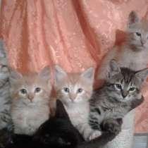 Подарю рыжего котёнка на счастье, в Кингисеппе