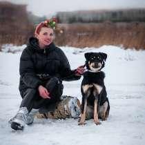 Умная небольшая собачка Эмма в дар, в Москве
