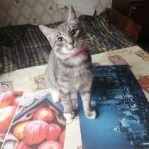 Котята в хорошие руки, в Чехове