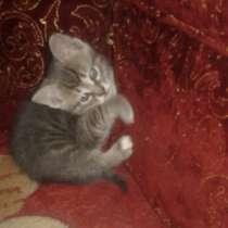 Отдам котёнка в заботливые руки), в г.Енакиево