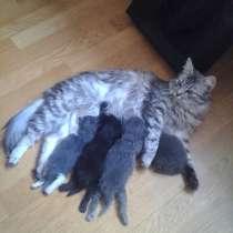 Первоапрельские котята от кошки с чудесным характером, в Дзержинском
