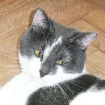 Ищет дом котик Шустрик, в Москве