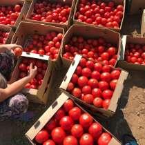 Срочно продам овощи, саженцы, в г.Караганда