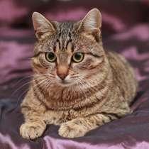 Уютный котик Теодоро ищет семью, в Москве