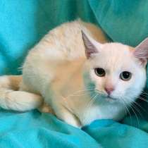 Белоснежный молодой котик Тайлер ищет дом и доброе сердце, в Москве