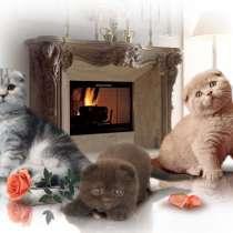 Шотландские котята, в Москве